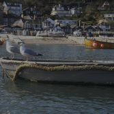 Two Seagull Tender