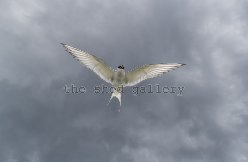 It's your TERN
