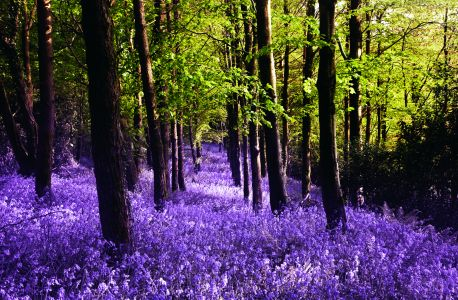 Woods in purple and green