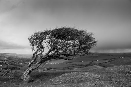 Bowing with the wind