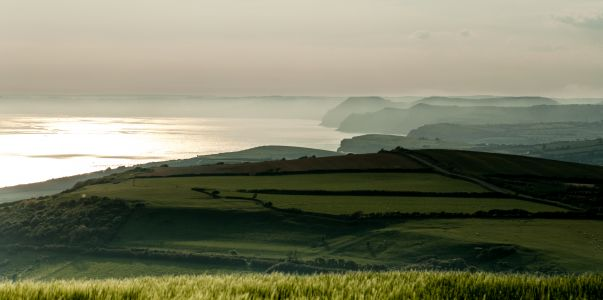 A very Dorset view