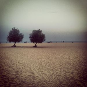 Two trees in the beach