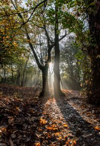 Autumn in Thorncombe woods