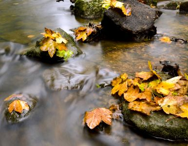 Autumn leaves by a river