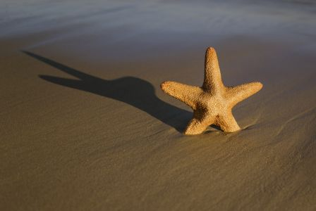 Star fish on Bournemouth beach
