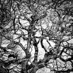 Branches to Branches