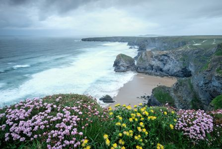 Flowers  on the Bedruthan Steps Cornwall