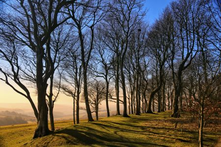 Chanctonbury Ring trees