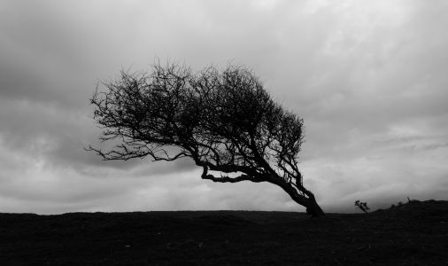 Tree on Thorncombe Beacon 1