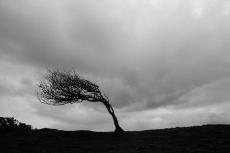 Tree on Thorncombe Beacon 2