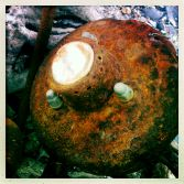 Backbeach Lyme finds 3