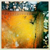 Backbeach Lyme finds 8