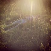Nap in the grass