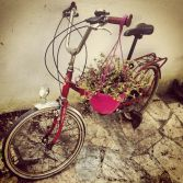 Bike and flower