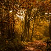 Follow the Autumn Path