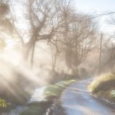 Snowdrops and Mist