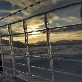 Frozen Fence on Y Garn 2
