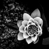Tales of the Lily Pond