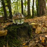 Autumn in a glass globe