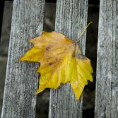 Yellow leaf on a wooden bench