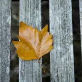 Single leaf on a bench