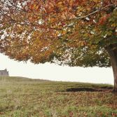 Autumn at Burrow Mump