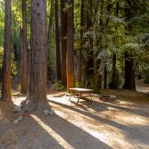 Redwood retreat