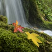 Autumn leaf waterfall