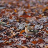 bird in leaves