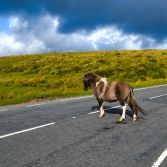 Pony Crossing