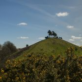 Colmers hill and gorse