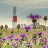 Portland Bill through wild flowers