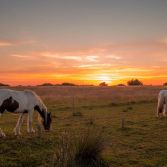 Arne horses at subset