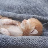 Nugget the orphaned kitten