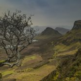 Lone tree over the Quiraing