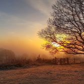 Sunrise with Gate and Tree on Kinver Edge
