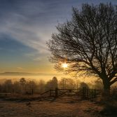 Sunrise on Kinver Edge mist and tree