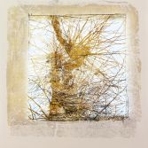Ghost Tree in Yellow Ochre 3