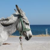 Donkey by the sea