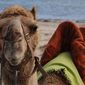 Camel ride along the beach?