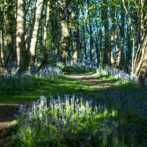 Up the Bluebell Path
