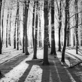 Winter Trees at Ashridge